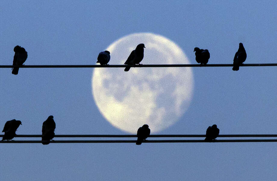 """Pigeons sit on power lines on Studewood in front of the moon. The third of four full moons in a season is a """"blue moon,"""" though many believe it's the second full moon in  a month. Photo: Cody Duty, Staff / © 2014 Houston Chronicle"""