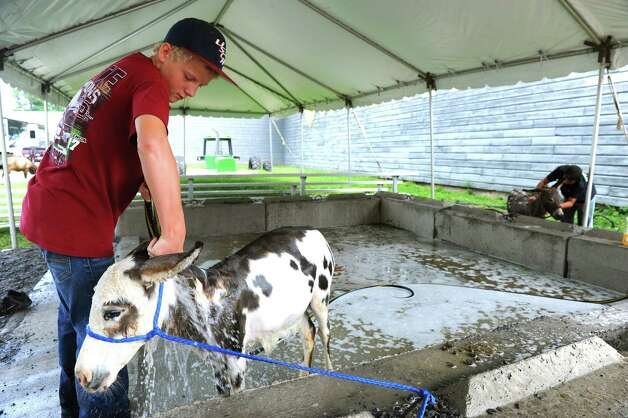 Twelve-year-old Tristin Nisbet, left, from South Carolina washes a miniature donkey during setup for Schoharie County Sunshine Fair on Friday July 25, 2014 in Cobleskill, N.Y. The fair runs July 26 to Aug. 2 with gates open 9 a.m. to midnight daily. (Michael P. Farrell/Times Union) Photo: Michael P. Farrell / 00027924A