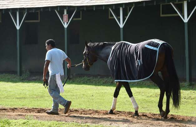 Upstart is cooled out by groom Pedro Altamirano under the trees in the barn area of trainer Rick Violette at the main track at the Saratoga Race course this morning July 29, 2015 in Saratoga Springs, N.Y.    (Skip Dickstein/Times Union) Photo: SKIP DICKSTEIN