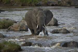 As world mourns Cecil the lion, 5 Kenyan elephants were slain - Photo
