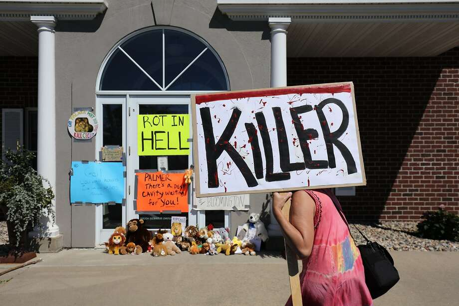 BLOOMINGTON, MN - JULY 29:  Protesters call attention to the alleged poaching of Cecil the lion, in the parking lot of Dr. Walter Palmer's River Bluff Dental Clinic on July 29, 2015 in Bloomington, Minnesota. According to reports, the 13-year-old lion was lured out of a national park in Zimbabwe and killed by Dr. Palmer, who had paid at least $50,000 for the hunt. (Photo by Adam Bettcher/Getty Images) Photo: Adam Bettcher, Getty Images
