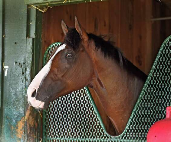 Japan, who will enter Saturday's Jim Dandy looks from his stall this morning in trainer Bill Mott's barn at the Oklahoma Training Center July 30, 2015 in Saratoga Springs, N.Y.    (Skip Dickstein/Times Union) Photo: SKIP DICKSTEIN