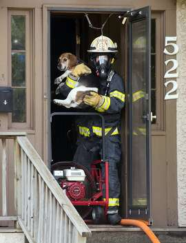 Virginia, Minn., Fire Chief Allen Lewis carries a beagle named Snoopy from a smoke-filled house in Virginia, Thursday, July 30, 2015. No one was home at the time of the blaze and Snoopy was rescued unharmed. (Mark Sauer/The Mesabi Daily News via AP) MANDATORY CREDIT