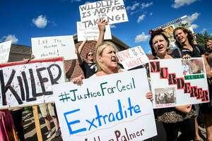 Zimbabwe seeks American lion killer's extradition - Photo