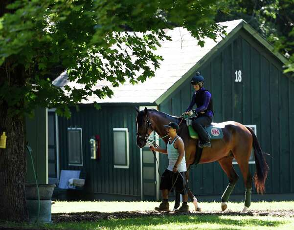 A trainee of the Ralph Nicks training stable heads to the track in the beautiful weather this morning July 31, 2015 at the Saratoga Race Course in Saratoga Springs, N.Y.      (Skip Dickstein/Times Union) Photo: SKIP DICKSTEIN