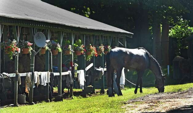 A Horse is cooled out in the barn area of the main track after morning exercise Friday morning July 31, 2015,  the Saratoga Race Course in Saratoga Springs, N.Y.      (Skip Dickstein/Times Union) Photo: SKIP DICKSTEIN