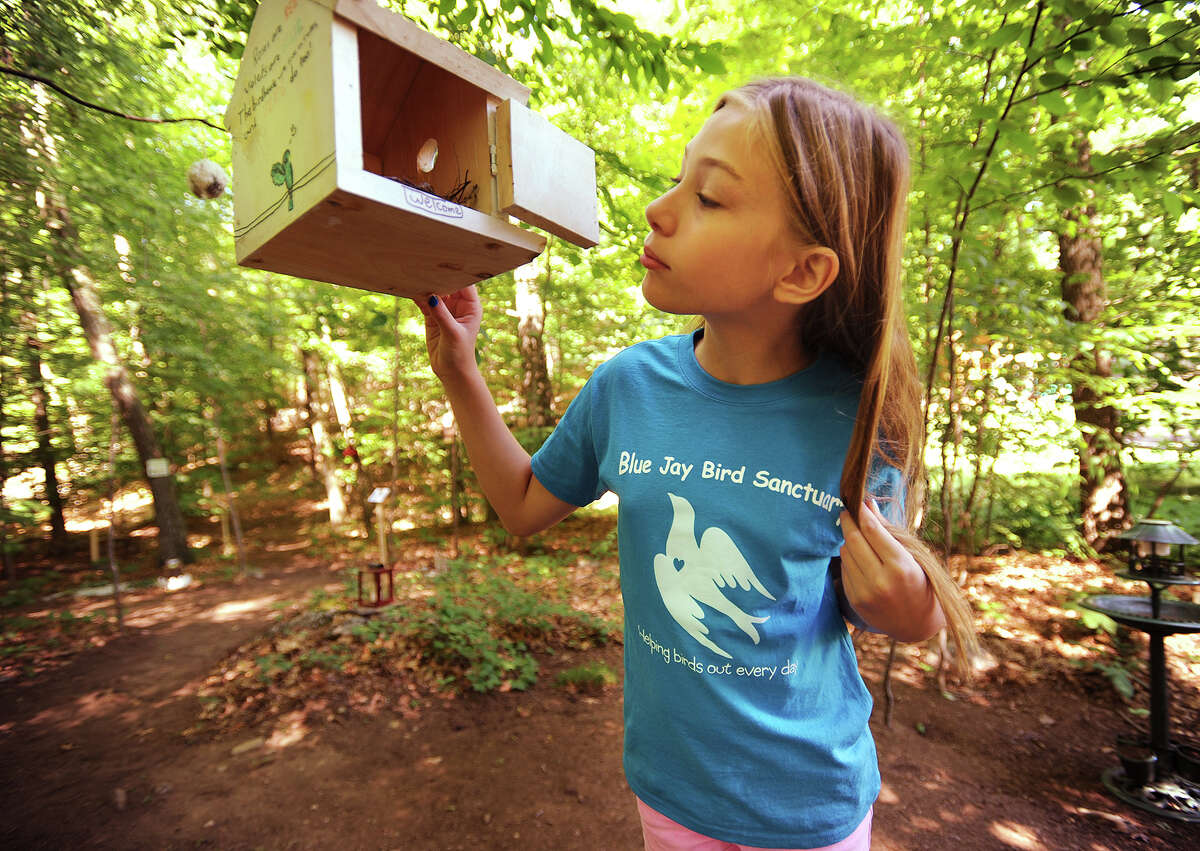 Kaitlyn Lapine, 10, of Monroe, looks in on a bird's nest in the Blue Jay Bird Sanctuary she constructed with the assistance of friends and family in the woods behind her home in Monroe.The sanctuary includes winding pathways, a wooden bridge, a seating area with a table, and a variety of bird houses and informational displays.