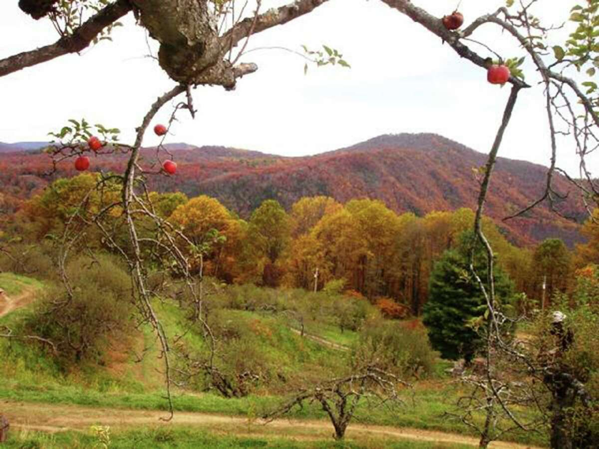 A view from The Orchard at Altapass: The orchard has you-pick-'em in late summer and fall. But from May to about October, it also offers events and some great classes in Appalachian culture and folkways.