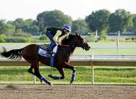 Triple Crown winner American Pharoah with Jorge Alvarez up trains at Monmouth Park in Oceanport, N.J., Saturday, Aug. 1, 2015. American Pharoah is preparing for Sunday's running of the Haskell Invitational horse race. (AP Photo/Mel Evans)   ORG XMIT: NJME105