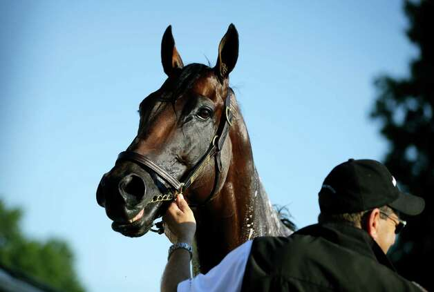 Assistant trainer Jimmy Barnes holds Triple Crown winner American Pharoah as they stand in the stable area at Monmouth Park in Oceanport, N.J., Saturday, Aug. 1, 2015. American Pharoah is preparing for Sunday's running of the Haskell Invitational horse race. (AP Photo/Mel Evans)   ORG XMIT: NJME108 Photo: Mel Evans / AP