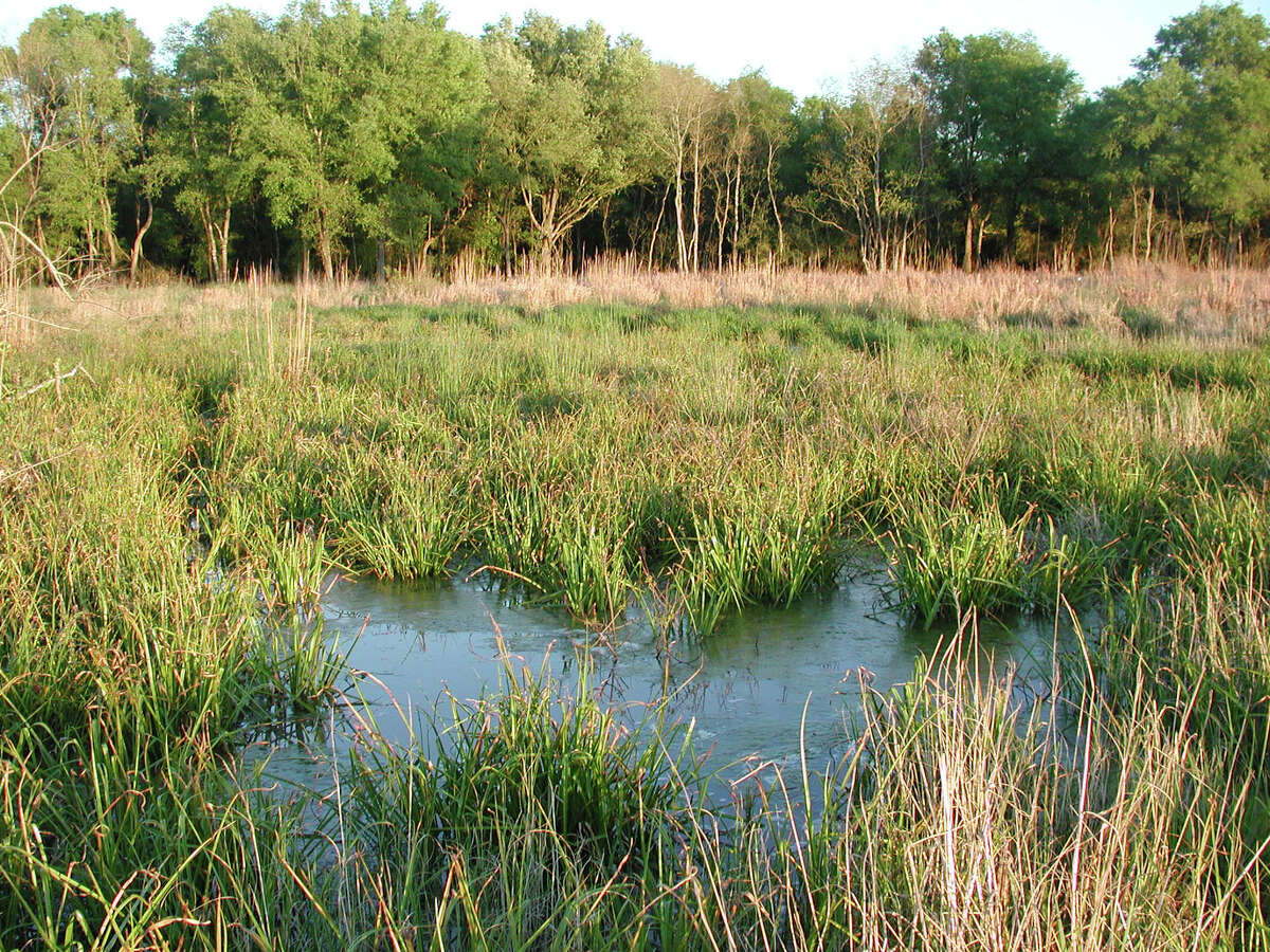 More than 38,000 acres of wetlands, like this one at Armand Bayou Nature Center in southeast Harris County, have vanished in the Houston area in the past 20 years.