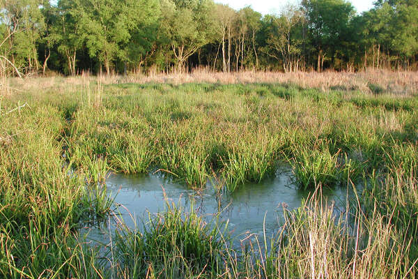 Review: Developers failing to follow wetlands mandate