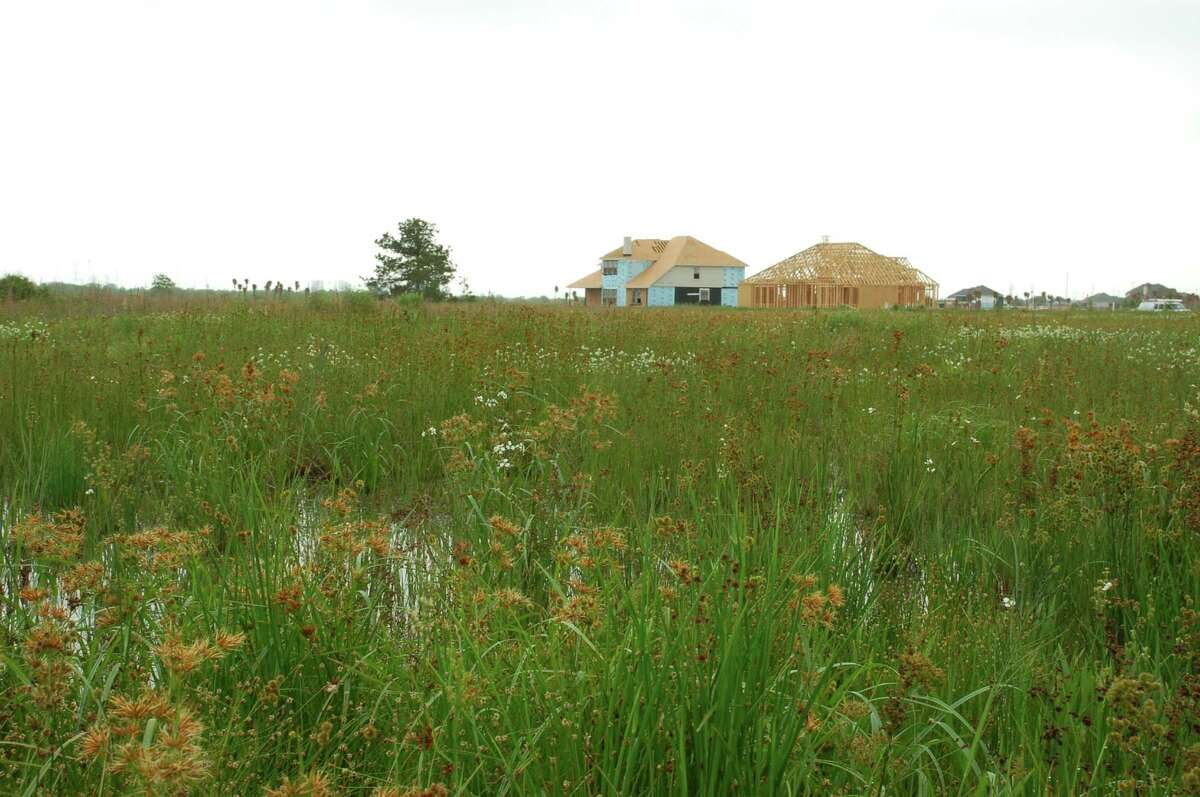 New homes are built near a wetland in the Houston area, one of several potential threats to the region's wetlands. Harris County, for instance, has lost nearly 13,000 acres, or 13 percent of its wetlands, while adding 1.6 million new residents.