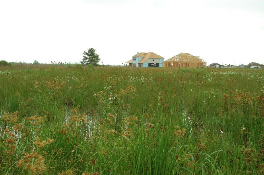 New homes are built near a wetland in the Houston area, one of several potential threats to the region's wetlands. Harris County, for instance, has lost nearly 13,000 acres, or 13 percent of its wetlands, while adding 1.6 million new residents. Photo: Image Courtesy Of Dr. John Jacob / Image courtesy of Dr. John Jacob