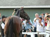 In this photo provided by Equi-Photo, people take photos of Triple Crown winner American Pharoah at Monmouth Park in Oceanport, N.J., Thursday, July 30, 2015. American Pharoah is expected to run in the Haskell Invitational at Monmouth Park on Sunday, Aug. 2. (Bill Denver/Equi-Photo via AP) ORG XMIT: MTP101