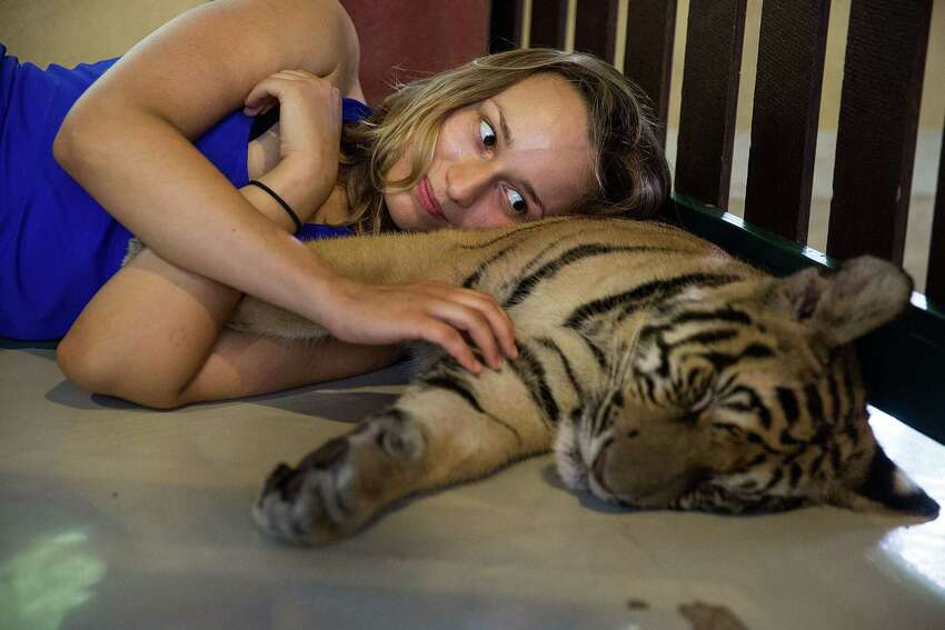 A tourist lies on a sleeping tiger's belly on July 29, 2015 in Mae Rim, Thailand. Face painting and celebrations marked International Tiger Day at Tiger Kingdom where tourists can pay to pet tigers and pose for photos. (Photo by Taylor Weidman/Getty Images)