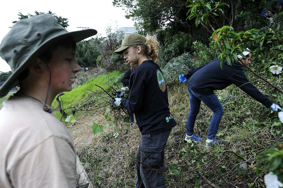 Lucian Szymkiewicz, left, and Harmony Baker, center, members of Greenagers, a Parks and Recreation youth group, clear away overgrown vegetation on a hillside as they help clean up at Crocker Amazon park in San Francisco, CA Saturday, August 1, 2015. Photo: Michael Short, Special To The Chronicle