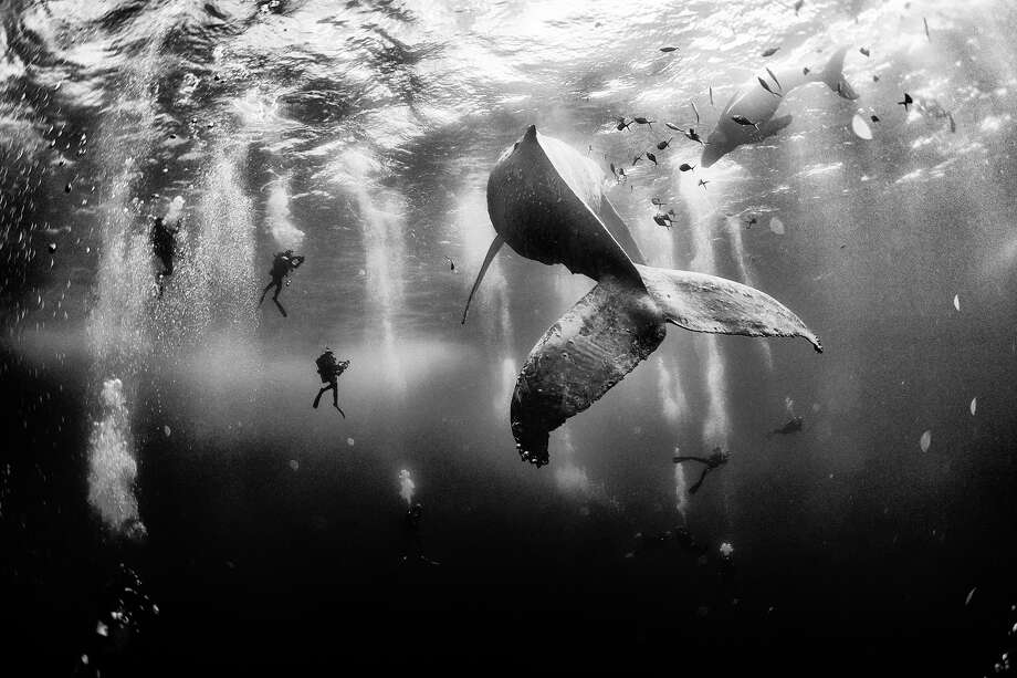 Diving with a humpback whale and her new born calf while they cruise around Roca Partida Island, in Revillagigedo, Mexico.See more: 2015 National Geographic Traveler Photo Contest Photo: Anuar Patjane, National Geographic Traveler Photo Contest