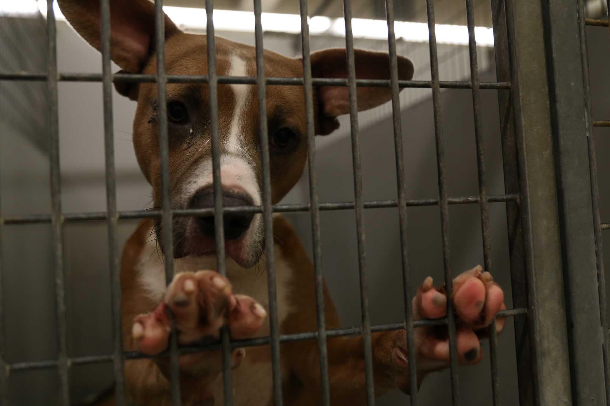 Montgomery County Animal Shelter employees sold animals for