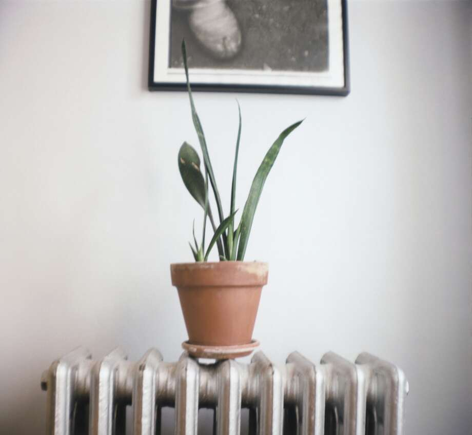 Old-school San Francisco radiators might be better used as plant holders than as heating units many years in the future. (Charles Gullung/Getty)