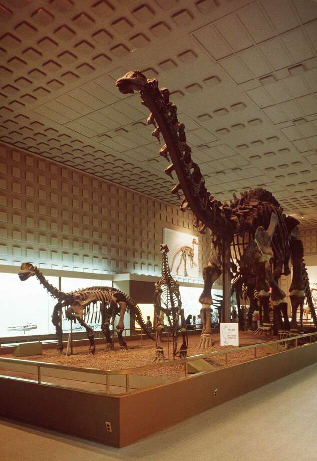 The Yale Peabody Museum of Natural History, which features many fossil skeletons of dinosaurs, was one of the original sites of the Connecticut Dinosaur Trail. This summer the trail grew by one when Lake Compounce was added. Photo: Contributed Photo / Connecticut Post Contributed
