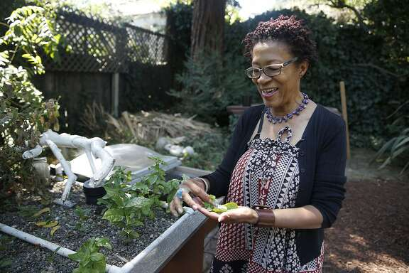 Cynthia Toliver from Toliver Works Food picks herbs in the garden in Oakland, Calif., on Wednesday, August 5, 2015