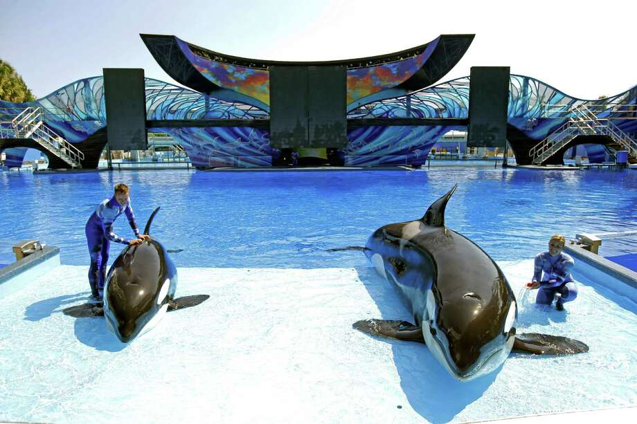SeaWorld trainers Ryan Faulkner (left), with killer whale Melia, and Michelle Shoemaker, with Kayla work on a routine for a show at the Orlando, Fla. theme park. SeaWorld suffered a decline in attendance during its most recent quarter. Photo: Associated Press File Photo / AP