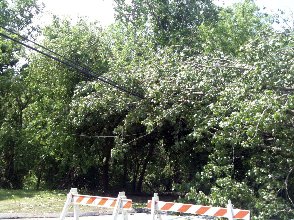 New Milford is considering an ordinance that could fine residents $250 a day if they don't take down trees that are in danger of falling on streets and sidewalks.