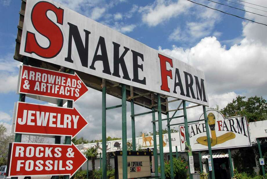 In its near 50-year history, the Snake Farm off Exit 182 on Interstate 35 has evolved from a campy carnival show to a popular family-friendly zoo. Click ahead for 16 facts behind this iconic, quirky Texas tourist spot.  Photo: Wendi Poole, Freelance / Freelance