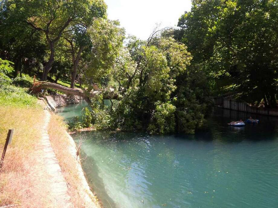A large tree snapped and is blocking the section of water near Camp Warnecke, from the Garden Street Bridge to the Last Tuber's exit until the tree and any debris is removed, according to a press release from the New Braunfels Police Department. Photo: Provided By New Braunfels Police Department