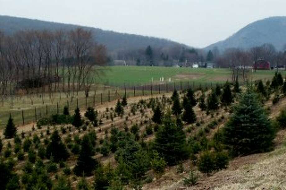 A Hamden Christmas tree farm will be the site of a picnic and tour on Saturday, Aug. 15, sponsored by the Connecticut Farmland Trust. Photo: Contributed Photo / KODAK DC240 ZOOM DIGITAL CAMERA