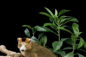 Family Day at Greenwich's Bruce Museum focuses on Madagascar - Photo