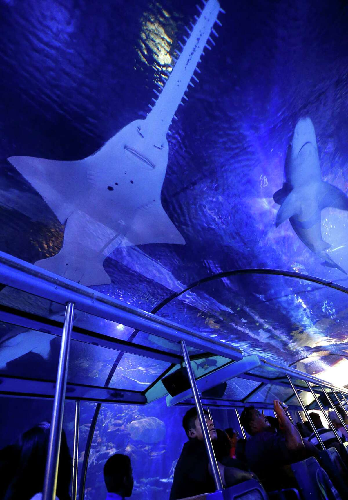 The Shark Voyage train ride under the 200,000 gallon shark tank during Shark Weekend at the Downtown Aquarium Saturday, Aug. 8, 2015, in Houston.
