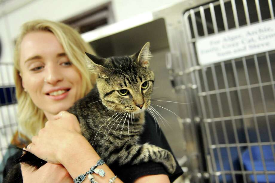 Staff member Natalie Capozzelli holds Buddy, who's available for adoption, during the 9th annual Feline Fest on Saturday, Aug. 8, 2015, at Mohawk Hudson Humane Society in Menands, N.Y. The annual celebration offered special feline adoption prices. For more information, contact (518) 434-8128 or visit www.mohawkhumane.org. (Cindy Schultz / Times Union) Photo: Cindy Schultz / 10032911A