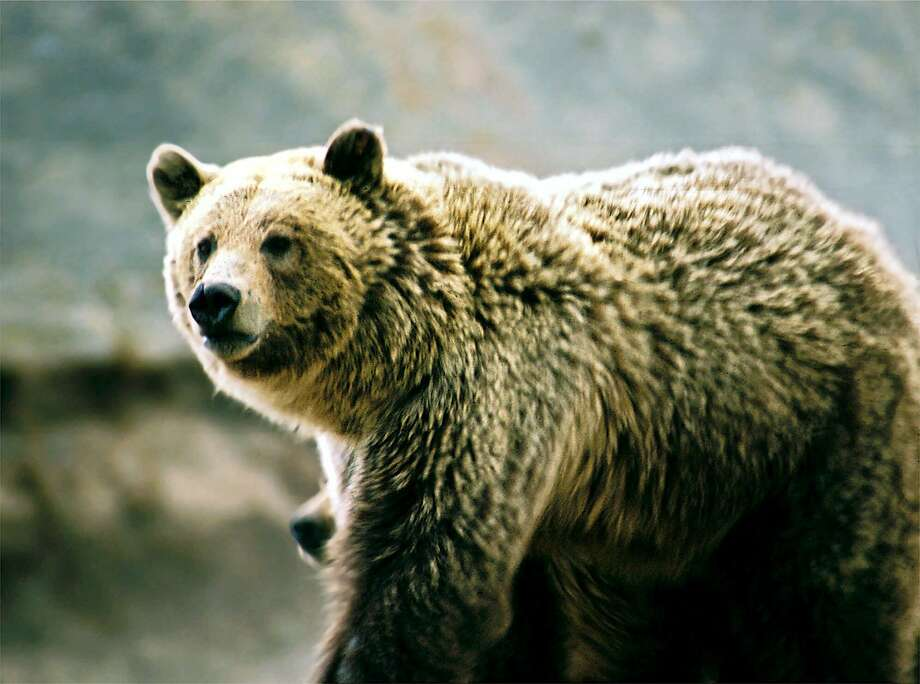 Thirty-eight-year-old mountain biker Brad Treat was killed by a grizzly bear while riding on a trail near Glacier National Park in Montana. The Forest Service officer and another person were riding their bikes on the trail in the Halfmoon Lakes area of the Flathead National Forest when they surprised the bear. Photo: Associated Press