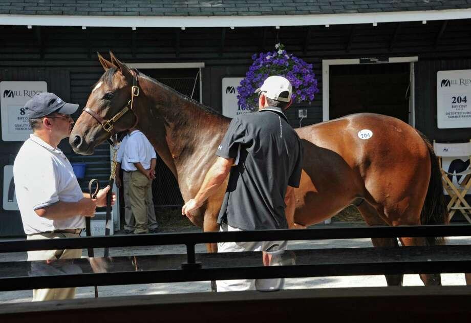 Randy Hartley of Ocala, FL, right, has showman Gustavo Calleja show a yearling a day before the Fasig-Tipton auction starts on Sunday, Aug. 9, 2015 in Saratoga Springs, N.Y.  (Lori Van Buren / Times Union) Photo: Lori Van Buren / 00032942A