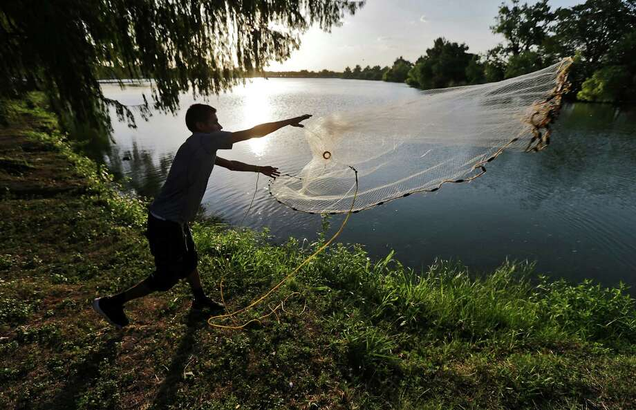 Fernando Yanez casts a net into Woodlawn Lake in an attempt to catch minnows for bait before sunset on a recent day. High temperatures almost reaching triple digits have made outdoor work and recreation barely manageable during the day. Photo: Kin Man Hui /San Antonio Express-News / ©2015 San Antonio Express-News