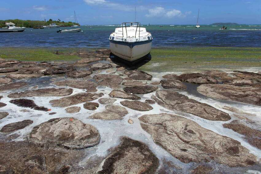 A boat sits abandoned in a heavily seaweed covered beach in the east coast town of Fajardo, Puerto Rico, Saturday, Aug. 8, 2015. Clumps of the brownish seaweed known as sargassum have long washed up on Caribbean coastlines, but researchers say the algae blooms have exploded in extent and frequency in recent years.