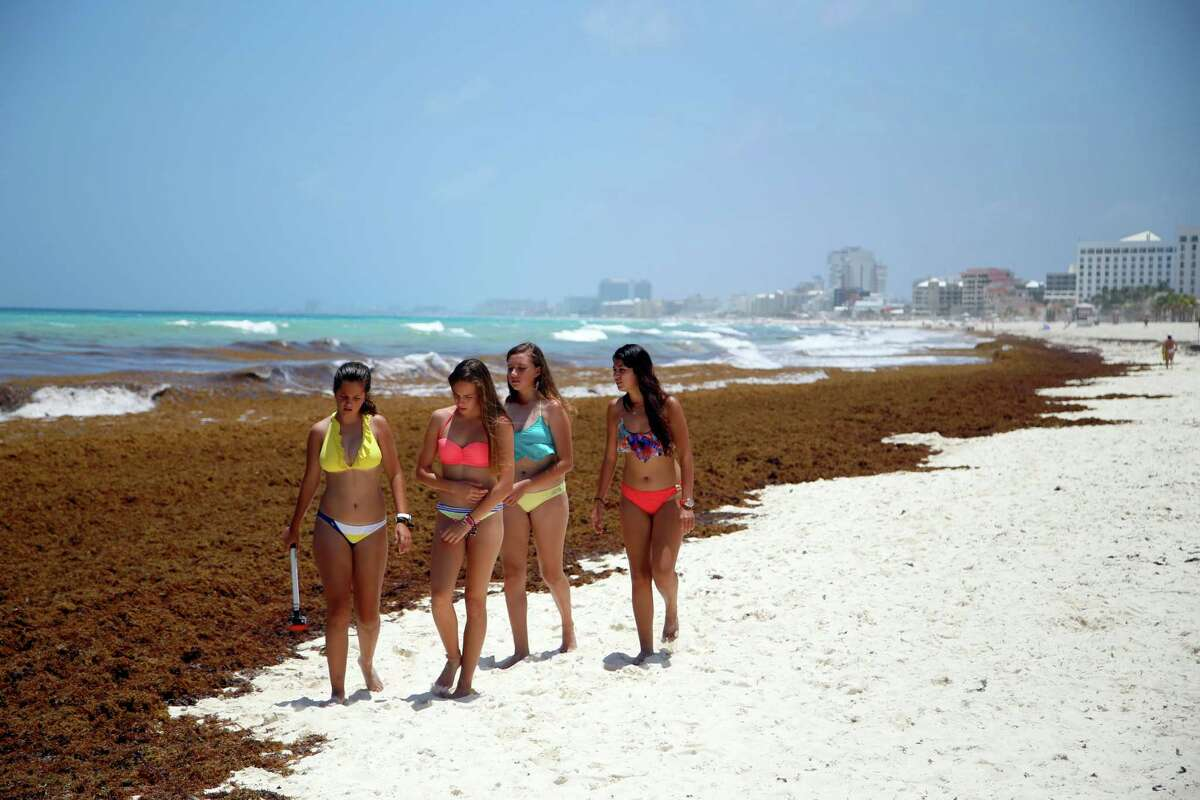 In this July 15, 2015, file photo, tourists walk past large quantities of seaweed piling up on the beach in the Mexican resort city of Cancun, Mexico. From the Dominican Republic in the north, to Barbados in the east, and Mexico�s Caribbean resorts to the west, officials are authorizing emergency money to fund cleanup efforts and clear stinking mounds of seaweed that in some cases have piled up nearly 10 feet high on beaches, choked scenic coves and cut off moored boats.