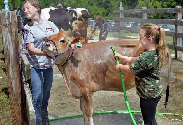 Shelby Vichter, 17, and Ashlyn Burns, 7, of Dun Creek Farm in Bethlehem wash their Jersey heifer Sierra on Tuesday at the Altamont Fair.  (John Carl D'Annibale / Times Union) Photo: John Carl D'Annibale / 10032906A