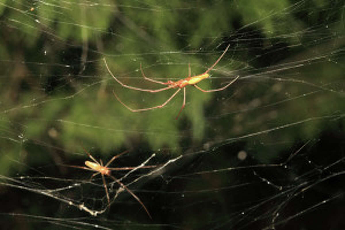 One part of a Dallas suburb has been covered in a giant spider web created by thousands of spiders.