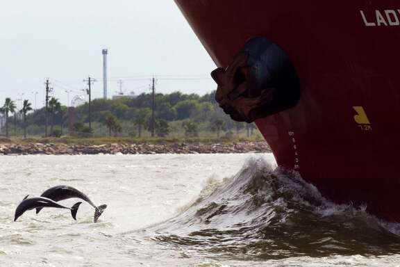 A pair of dolphins leap out of the water in front of a ship near Pelican Island in Galveston Bay in 2012. A new report warns the bay's health is in danger.