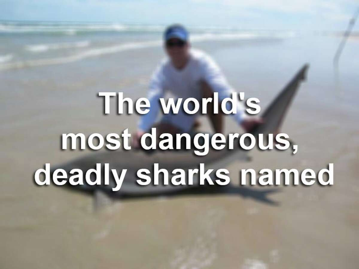Discovery News has named the three deadliest sharks that are roaming Earth's waters. Check them out, along with other sharks that have taken various chunks of human flesh.