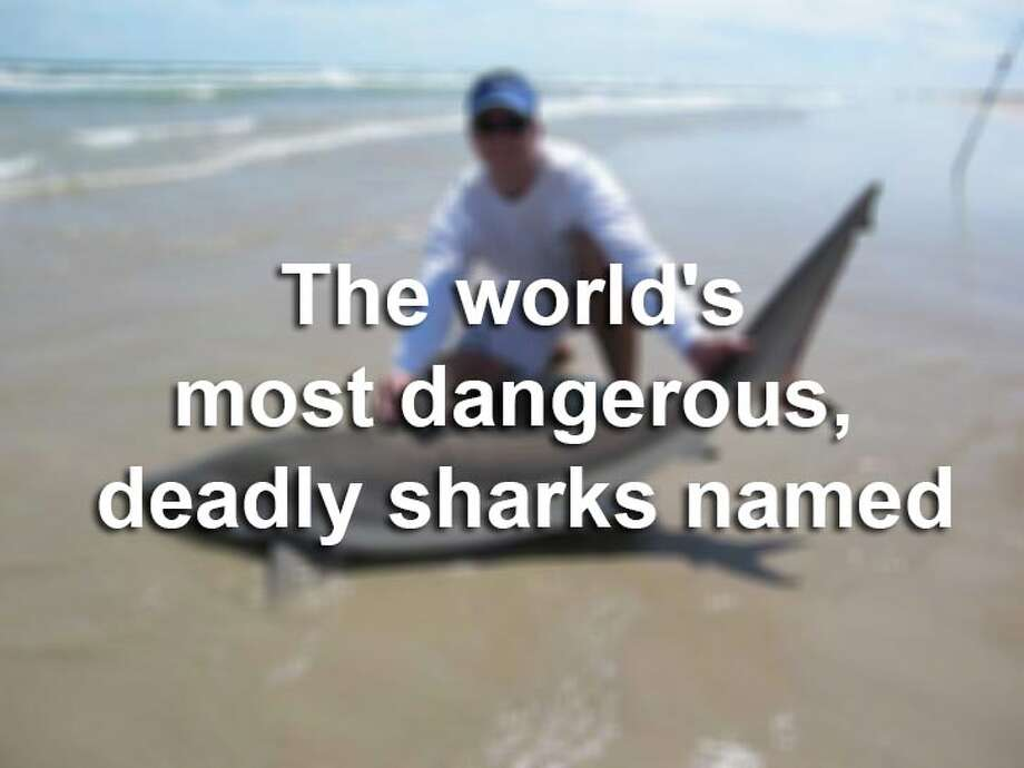"""Discovery News has named the three deadliest sharks that are roaming Earth's waters. Check them out, along with other sharks that have taken various chunks of human flesh. Photo: Photo By Eric """"Oz"""" Ozolins, File"""