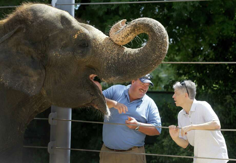 Paul Ling of Baylor College of Medicine, right, and Daryl Hoffman, Houston Zoo curator of large mammals, are working to treat elephants, like Methai, who are prone to a potentially deadly virus. Photo: Melissa Phillip, Staff / © 2015 Houston Chronicle