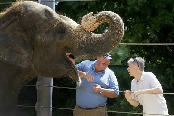 Paul Ling of Baylor College of Medicine, right, and Daryl Hoffman, Houston Zoo curator of large mammals, are working to treat elephants, like Methai, who are prone to a potentially deadly virus.