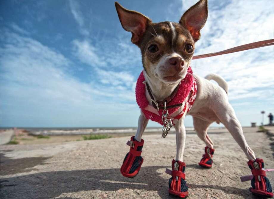Walking around on Galveston Island Photo: Galveston CVB / Vadim Troshkin
