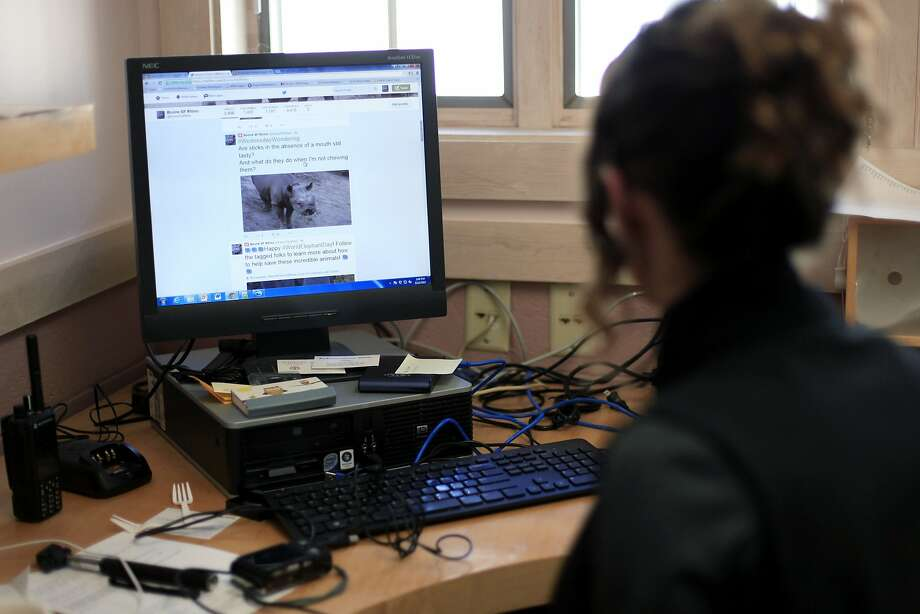 Bethany Krebs monitors Boone's Twitter account in her office at the S.F. Zoo. Krebs modeled Boone's voice after some popular children's characters. Photo: Connor Radnovich, The Chronicle