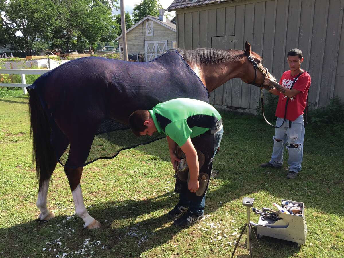 8-13-15 : Everyone needs a new pair of shoes once in a while, right? Well, so do our four-legged friends who spend the summer with us at Saratoga Race Course. Here, a thoroughbred gets fitted for some new horseshoes Wednesday morning on the Oklahoma Training Track. They say it doesn't hurt when the nails are put into the shoes, and here is the proof. This horse didn't make a peep as he got his new kicks. Tim Wilkin / Times Union