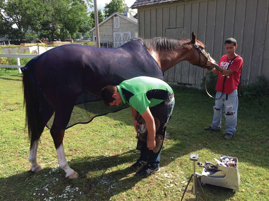 Everyone needs a new pair of shoes once in a while, right? Well, so do our four-legged friends who spend the summer with us at Saratoga Race Course. Here, a thoroughbred gets fitted for some new horseshoes Wednesday morning on the Oklahoma Training Track. They say it doesn?t hurt when the nails are put into the shoes, and here is the proof. This horse didn?t make a peep as he got his new kicks. Tim Wilkin / Times Union